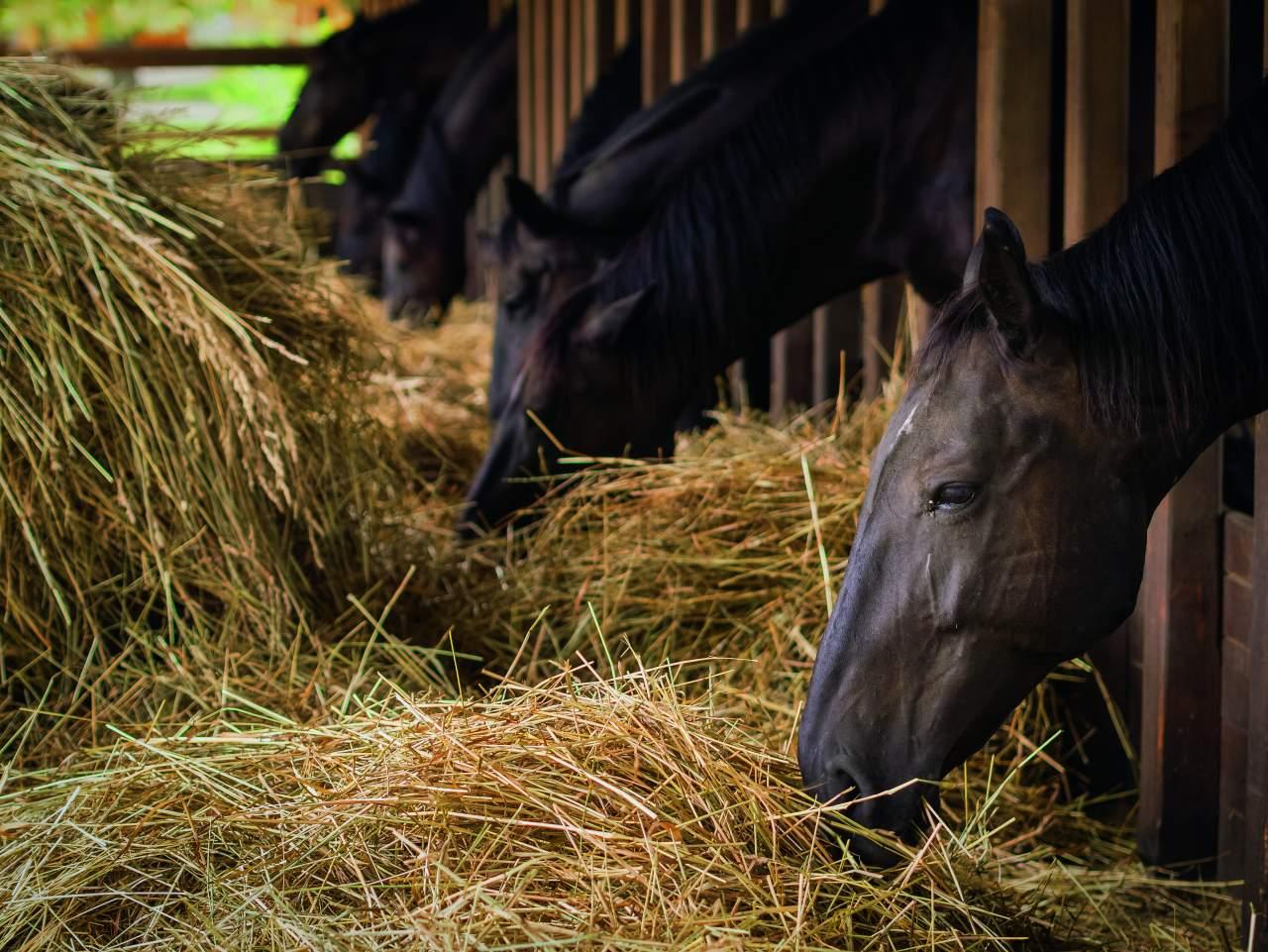 Stiefel Vitamin Liquid Flüssiges Ergänzungsfutter für Pferde