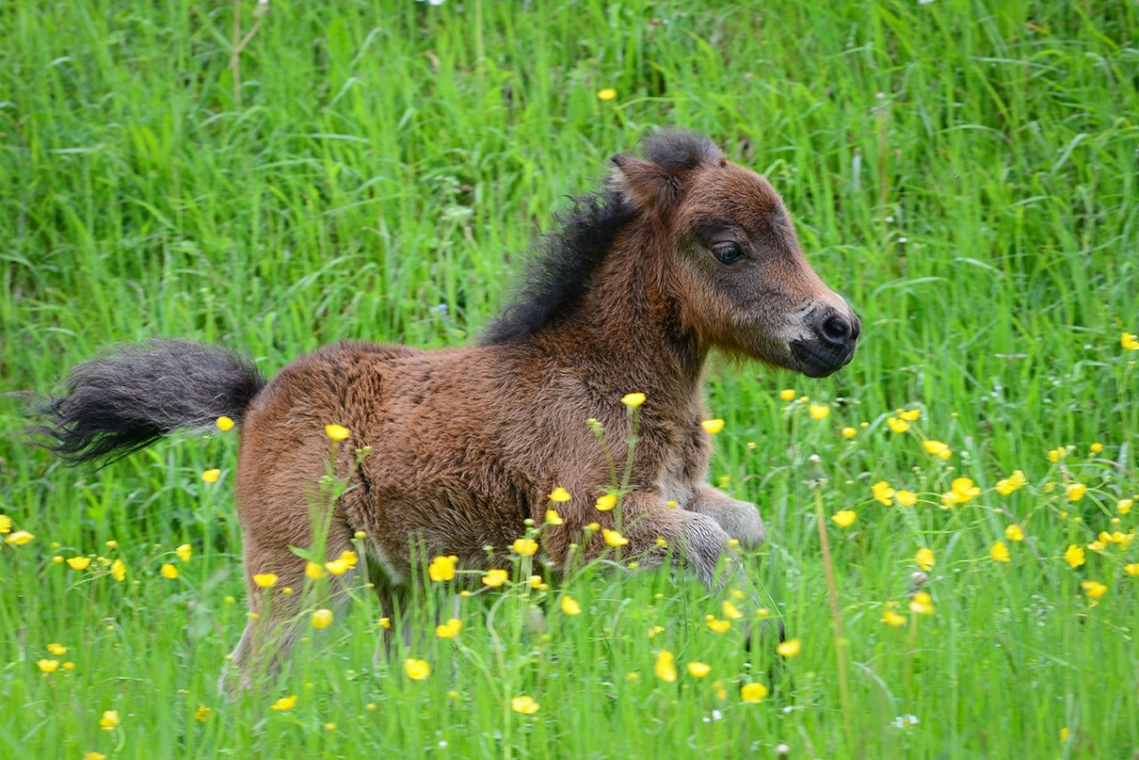 Fohlen Was Nach Der Geburt Zu Tun Ist Pferdehaltung