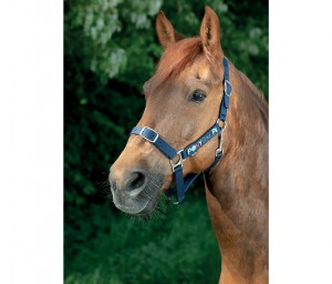 Equi-Kids Halfterset Pony Love