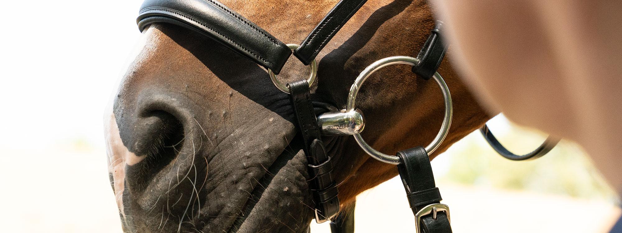 Das Pferd für das Turnier vorbereiten